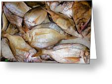 Fresh Fishes In A Market 4 Greeting Card