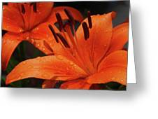 Fresh Floral Delight Greeting Card