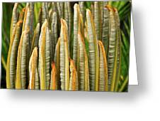 Fresh Fronds Greeting Card