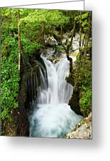 Fresh Green Forest In Spring At Lepenica River Gorge At Sunikov  Greeting Card
