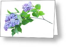 Lilac Twig Greeting Card