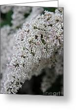 Fresh Lilac Perfume Greeting Card