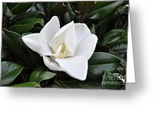 Fresh Magnolia Greeting Card