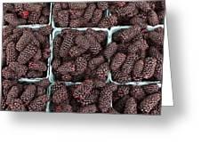 Fresh Marionberries Greeting Card