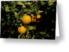 Fresh Oranges Greeting Card