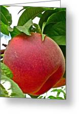 Fresh Peach Greeting Card