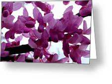 Fresh Redbud Blooms Greeting Card