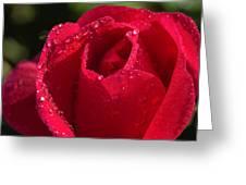 Fresh Rose Greeting Card