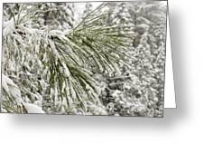 Fresh Snow Covers Needles On A Pine Greeting Card