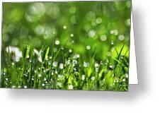 Fresh Spring Morning Dew Greeting Card