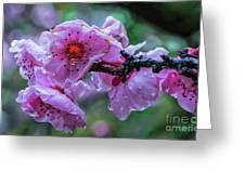 Fresh Spring Rain Greeting Card