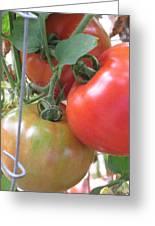 Fresh Tomatoes Ahead Greeting Card