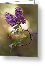 Fresh Violet Lilac Flowers Greeting Card
