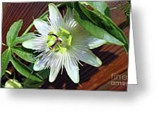 Fresh White Passion Flower  Greeting Card