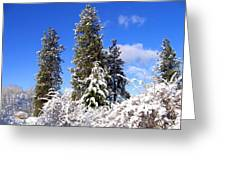 Fresh Winter Solitude Greeting Card