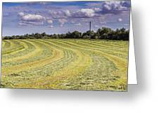 Freshly Mown Hay  Greeting Card