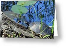 Freshwater Turtle Sunning Greeting Card