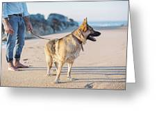 German Shepherd With Man On The Beach Greeting Card