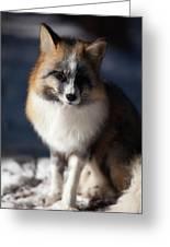 Friendly Fox Greeting Card