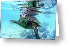 friendly Hawaiian sea turtle  Greeting Card by Sean Davey