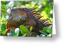 Friendly Iguana Greeting Card