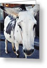 Friendly Route 66 Burro Greeting Card