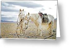 Friends And Companions  Greeting Card