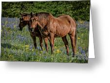 Friends In The Bluebonnets Greeting Card