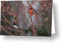 Friends Of A Feather Greeting Card