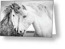 Friends V Greeting Card by Tim Booth