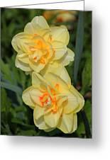 Friendship Daffodils Greeting Card