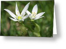 Friendship Flowers Greeting Card