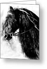 Friesian Horse Beauty Greeting Card