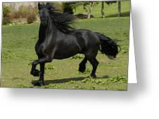 Friesian Horse In Galop Greeting Card by Michael Mogensen