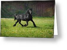 Friesian Power Greeting Card