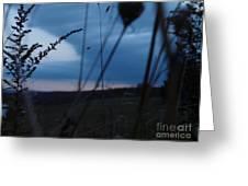 Frill Sun Greeting Card