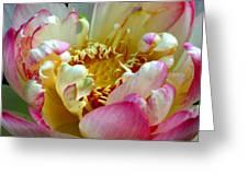Frilly Lotus Greeting Card
