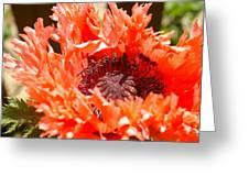 Frilly Poppy Greeting Card
