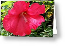 Frilly Red Hibiscus Greeting Card