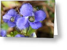 Fringed Gentian 1 Greeting Card