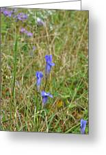 Fringed Gentian 2 Greeting Card