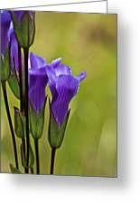Fringed Gentian 9 Greeting Card