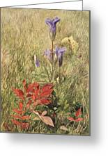 Fringed Gentians Greeting Card