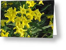 Fringed Puccoon Greeting Card