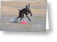 Frisbee On The Beach Greeting Card