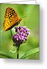 Fritillary Butterfly And Flower Greeting Card