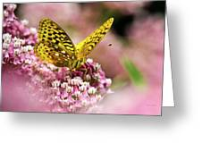 Fritillary Butterfly On Flowers Greeting Card