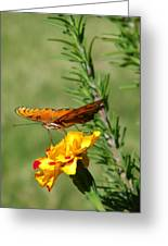 Fritillary Flitterby Greeting Card
