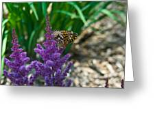Fritllary Butterfly On Astilbe Greeting Card