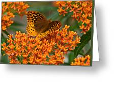 Frittalary And Milkweed Greeting Card